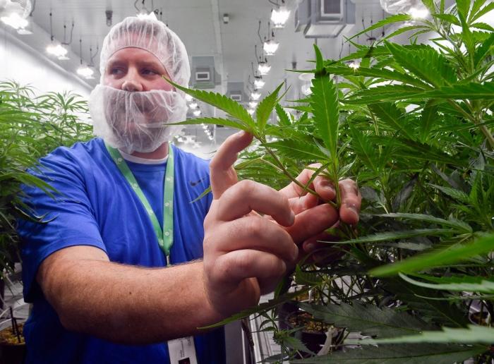 marijuana legalization, marijuana