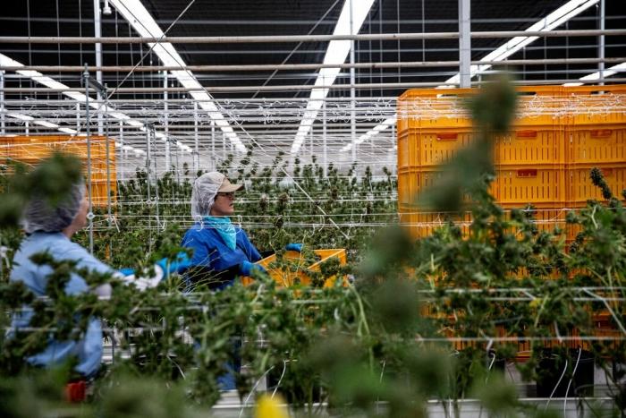 marijuana legalization, Chuck Schumer, US Senate
